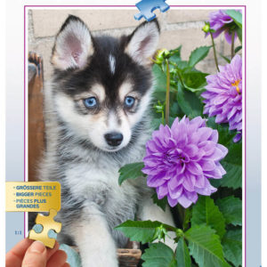 Ravensburger Cute Husky 500pc Puzzle