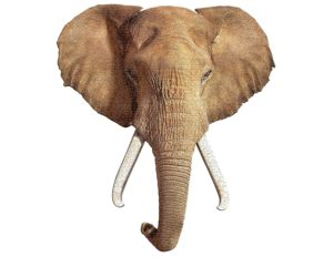 I Am Elephant Head Shaped Puzzle 700pc